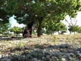Amateurvideo Shibari-Session mit Wilco - TEIL 2 von ProfeHera